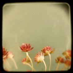"""Little Garden"" by Alicia Bock #ttv"