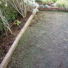クラピア<4>販売場所・価格 | クラピア大好き Railroad Tracks, Projects To Try, Sidewalk, Garden, Plants, Garten, Side Walkway, Sidewalks, Gardens