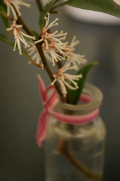 Sarcococca by my bed