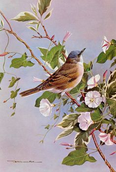 Inspiring Birds quotes /beautiful Birds painting/Basil Ede Painting | Symphony For Love