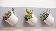 Hang the board, then hang your coffee-cup succulents on their hooks!
