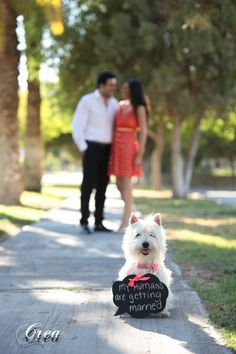 Westie announcing wedding
