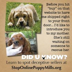 Online is the new puppy mill market place. If they want to ship you a puppy sight unseen, you're probably dealing with a puppy mill.