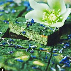 Sign up for our Matcha Melody Subscription and get Free New Products before we release them!  http://ift.tt/1okujCf  #matcha #agqr #japan #foodporn #icecream #tea #cafe #matchalatte #early_bird #matchapowder #matchalover #matchaaddict #matchagreentea #greentea #green #tea #detox #teadetox #fooddetox #greenteadetox #wellness #raw #vegan #organic #natural #nature #superfood #fb #twitter #pin