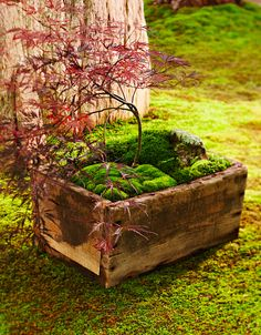 Moss dish gardens allow you to get up close and personal with a lush green landscape. Our step-by-step instructions get you started, and 6 dish garden designs with complete plant lists give you inspiration for your own creation. Succulents In Containers, Container Plants, Planting Succulents, Container Gardening, Indoor Gardening, Gardening Tips, Indoor Herbs, Growing Moss, Growing Plants