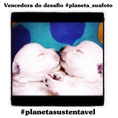 Esta bela fotografia foi a mais votada da categoria Cães, do desafio #planeta_suafoto que realizamos no Instagram. Os dois cãozinhos foram fotografados pela Daniella Godoy, na casa dela, há alguns anos. Hoje, eles já estão adultos: http://abr.io/5PlE
