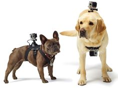 15 Gifts That Will Definitively Prove You Love Your Dog | Go Pro Fetch Does your dog like to leap off docks and get radical? The Fetch harness has two mount locations for GoPro cameras—one on the back and another on the chest—and makes it easy to catch all the action. At the very least you'll get a lot of great butt-sniffing footage. $60 | WIRED.com