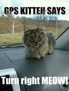 GPS kitty!