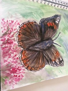 22/1/16. I also did some drawings with watercolour to present the interesting colours within a butterflies wing .