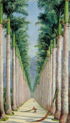 Marianne North (1830-1890) - Royal Botanic Gardens Kew - Royal Palm Avenue à Botafogo, Brésil c.1873 (MN63)