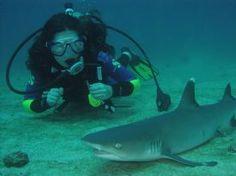 White Tip Reef Shark-Drake Bay, South Puntarenas