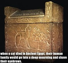 No wonder those little buggers thought they were gods.