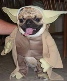 #pug #baby | YODA | Pinterest : dog in seal costume  - Germanpascual.Com