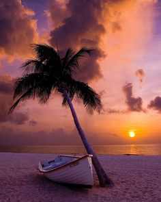 boat and palm tree on the beach with a beautiful sunset in the background