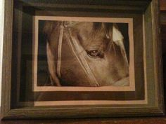 1000 Ideas About Horse Shadow Box On Pinterest