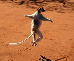 dancing Animals (  see all 20 pics)