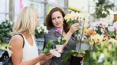 Co dělat, abyste měli ty nejkrásnější orchideje? Chce to méně vody i světla!