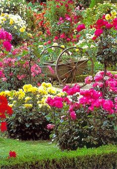 Wagon in the Rose Garden.. Great