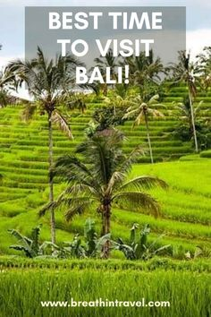 Before traveling, you have to know the best time to visit Bali and weather in Bali in an effort to explore the island at the best and satisfy yourself. Ways To Travel, Best Places To Travel, Vacation Places, Tropical Places To Visit, Cool Places To Visit, Scuba Travel, Bali Travel, Bali Weather, Dubai Attractions