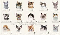 Stoffe für Fachhändler - Cat Breeds - Swafing GmbH