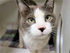 *** TO BE DESTROYED 09/20/17 *** **RETURN** FERRUCCIO was returned for