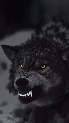 Another picture of a wolf!