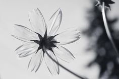 Like a glass flower !