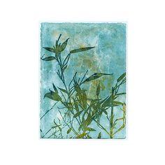 Original cyanotype print LEAFY BAMBOO cyanotype botanical art  #originalart #photography #sunprint #cyanotypeideas