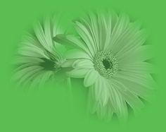 Gerbera, Herbs, Plants, Herb, Plant, Planets, Medicinal Plants