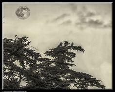 Herons and the moon by Giancarlo Gallo
