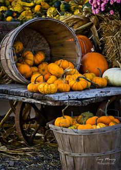 Fall Pumpkins by TroyMarcyPhotography.com, via Flickr