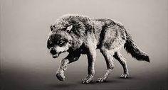 Resultado de imagem para wolf tumblr