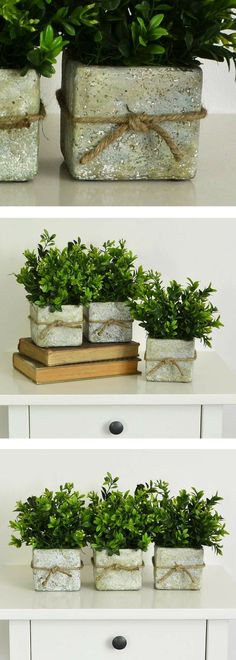 Three Rustic Pots of Boxwood, Spring Centerpiece, Boxwood Topiary, Rustic Centerpiece, Farmhouse Centerpiece, Rustic Containers #ad