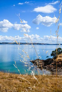 How to get off-the-beaten path in Auckland and hike a secluded trail on Waiheke Island.
