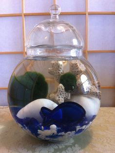 Marimo and Blue Fish  by Biophilia, Guelph, Ontario $40 Marimo, Recycled Glass, Ontario, Snow Globes, Recycling, Fish, Blue, Repurpose, Upcycle