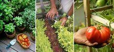 Huerto casero: Qué plantar en casa - Ideas para crear tu propio huerto urbano