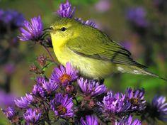 Bird in Flowers - Birds Wallpaper ID 1284327 - Desktop Nexus Animals
