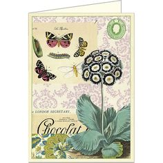 Flora & Fauna Butterflies Cavallini Card