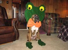 halloween dog costume boxer | Water Sky
