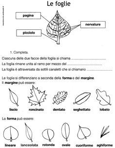 le foglie forma e margine classe seconda. Cool Science Experiments, Science Fair Projects, Science For Kids, Italian Lessons, School Subjects, Learning Italian, Free Activities, Elementary Science, Problem Solving