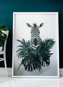 Impermanence - The Botanist ' Zebras ' serie by Anna Church Color Photography, Animal Photography, Fine Art Prints, Framed Prints, Anna, Art Object, Conceptual Art, Zebras, Custom Framing