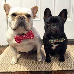 Boomer and Brinkley, French Bulldogs in bow ties, @boomerandbrinkley