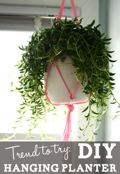Trend to Try: DIY hanging planter - JSOnline