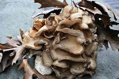 Maitake mushroom. It's just a picture.