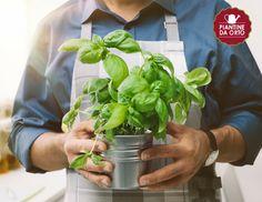 My Secret Garden, Terrazzo, Spinach, Mandala, Vegetables, Green, Plants, Hobby, Palazzo