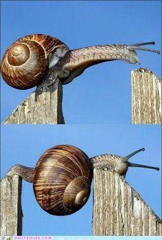 Wow! Go snail go!