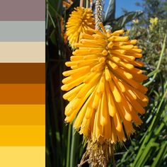 Week 4 colour swatch