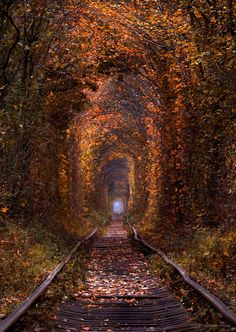 "Tunnel of love - Join me on<a href=""https://www.facebook.com/psfoto.com.ua""> My Facebook Page  </a> And follow <a href=""https://instagram.com/sergey_polyushko"">  My Instagram</a> Picture taken on a Canon 5DM2+Canon70-200mm2.8l is II"