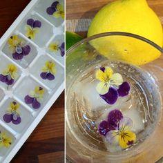 Hibiscus, List Of Edible Flowers, Garden Beds, Home And Garden, Elderberry Flower, Vegetable Bed, Garden Supplies, Soup And Salad, Pansies