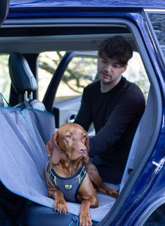 Once on, the Impact Harness can be integrated into your car's seatbelt system with just one click. Simply run the seatbelt through the two loops on the back of your pup's harness before buckling up. Test Video, Magnum Opus, Dog Safety, Dog Car, Dog Travel, Medium Dogs, Dog Harness, Romans, Small Dogs